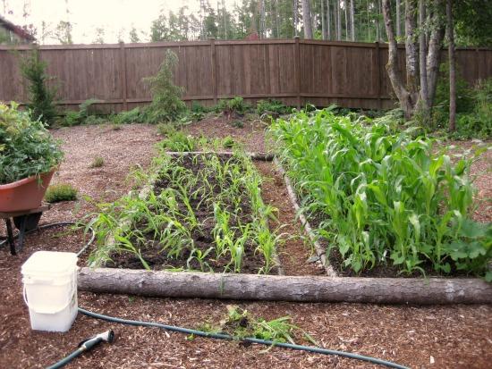 Companion Planting That Works