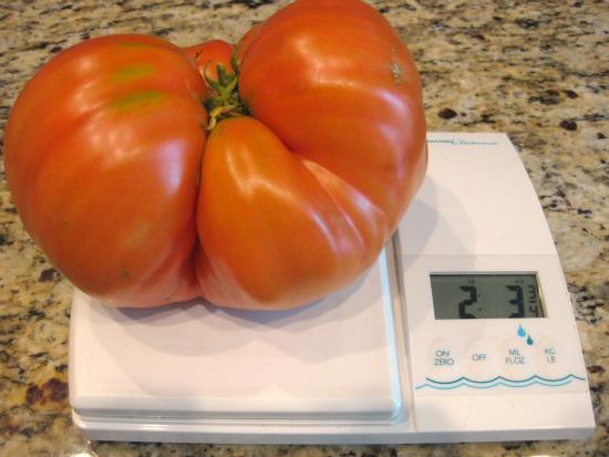 Now That's Some Tomato
