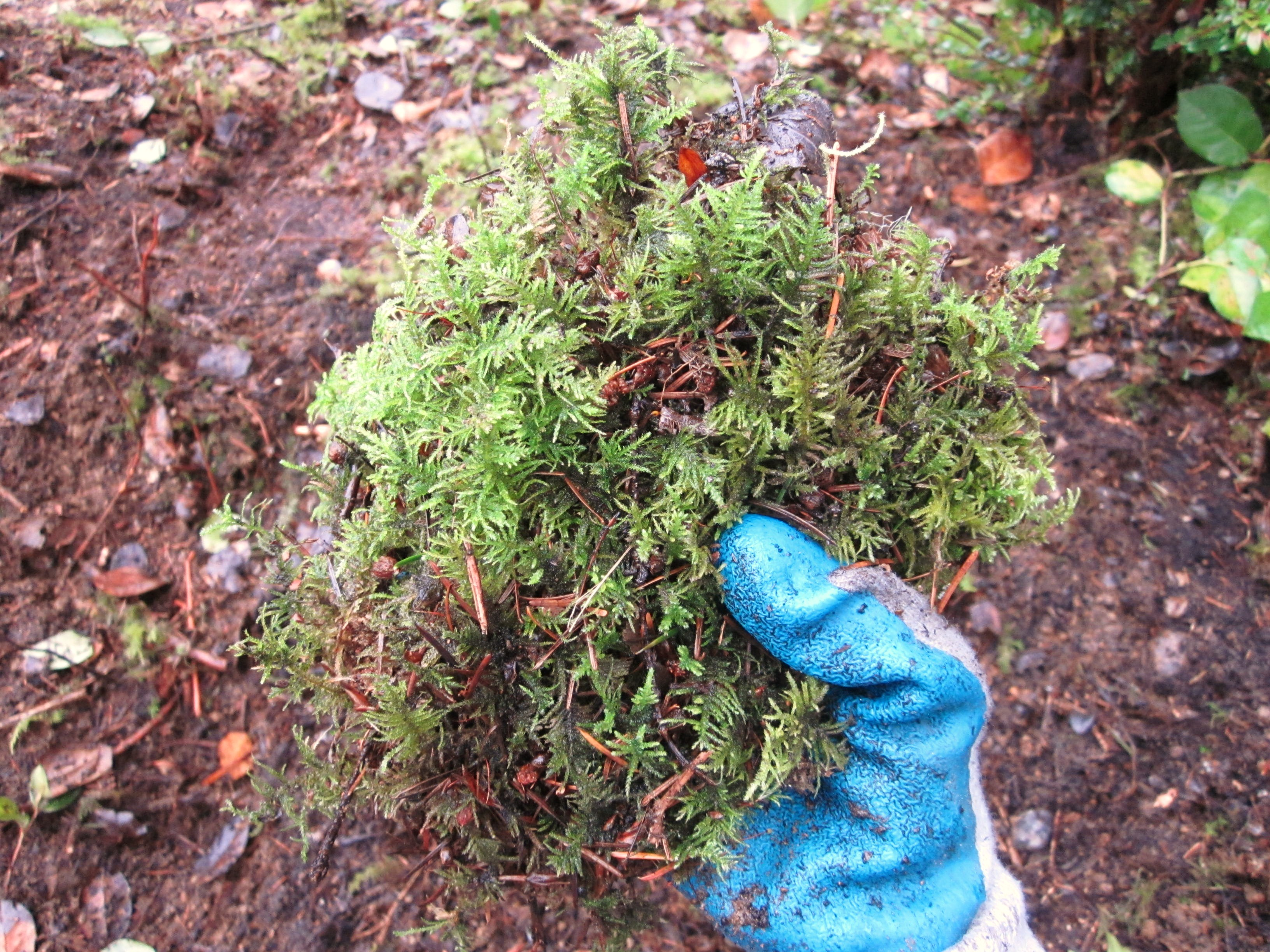 How to Plant a Flower Basket Using Moss