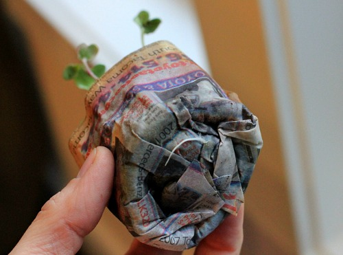 DIY paper pot seedlings
