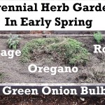 How to plant a perennial herb garden