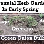How to plant a perennial herb garden