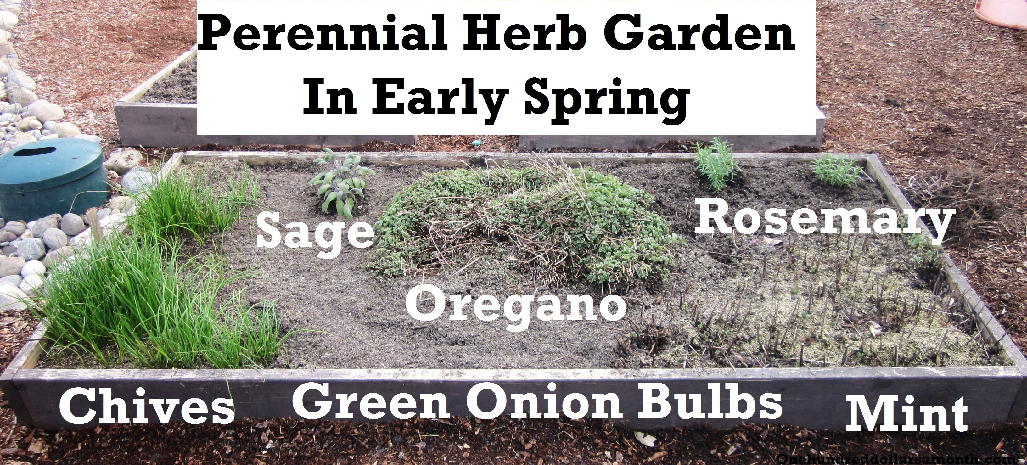 How to Grow Your Own Food: Planting a Perennial Herb Garden