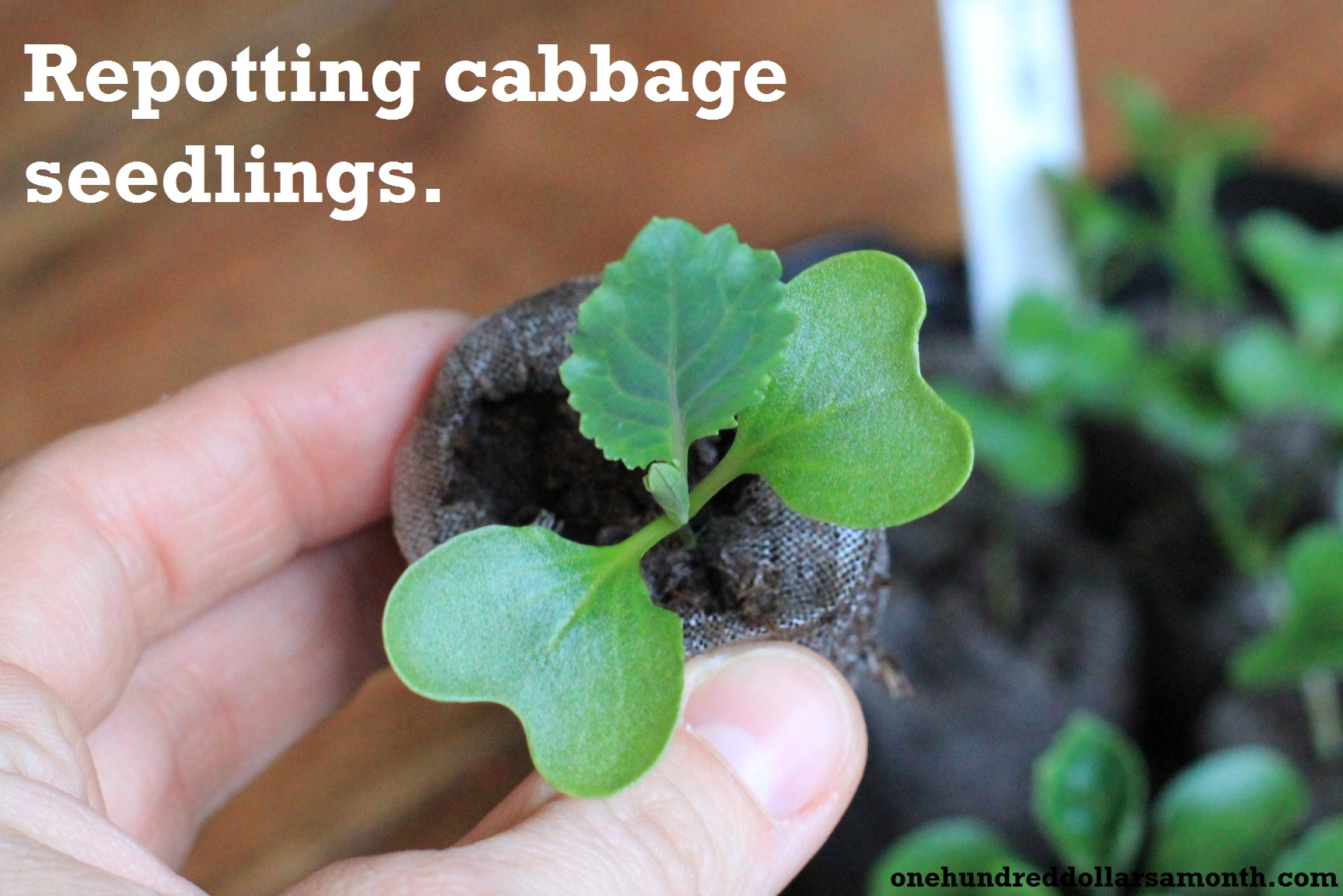 How to Grow Your Own Food: Repotting & Thinning Seedlings