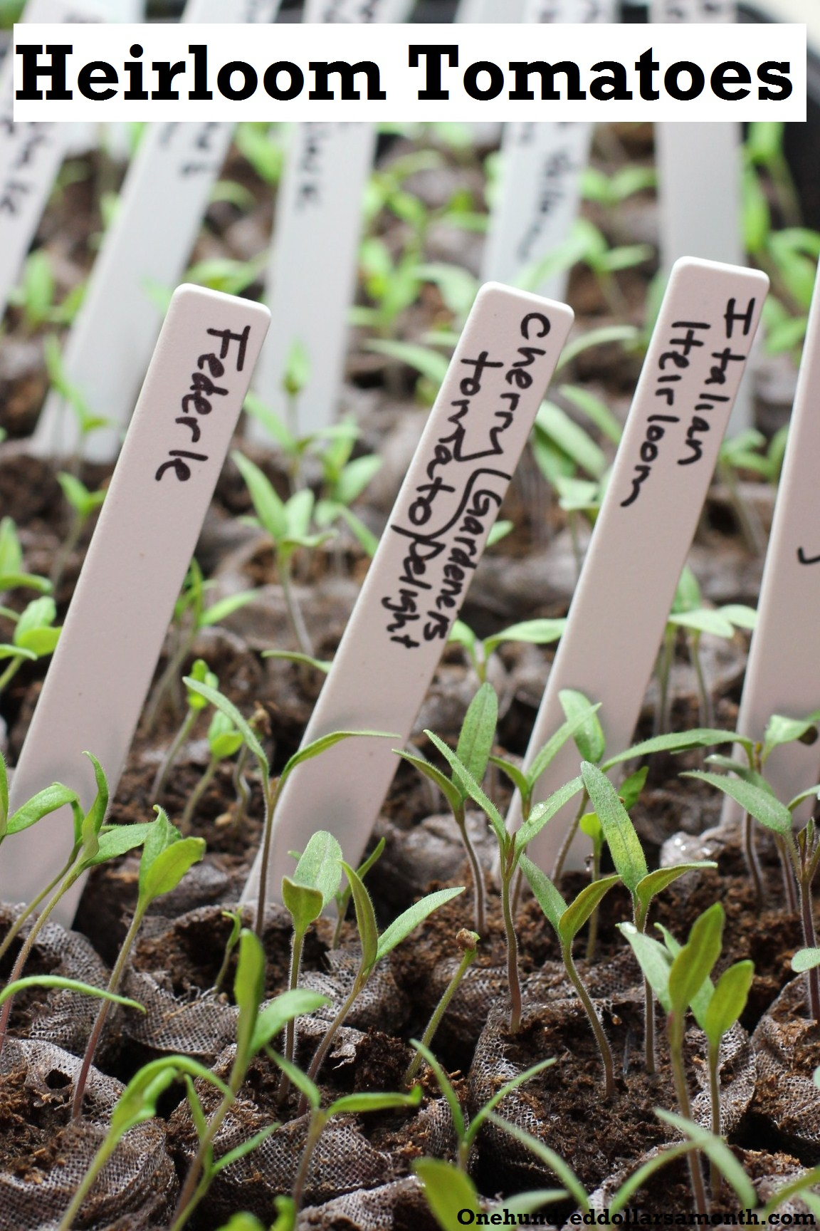 How to Grow Your Own Food: Using Grow Lights to Start Seedlings