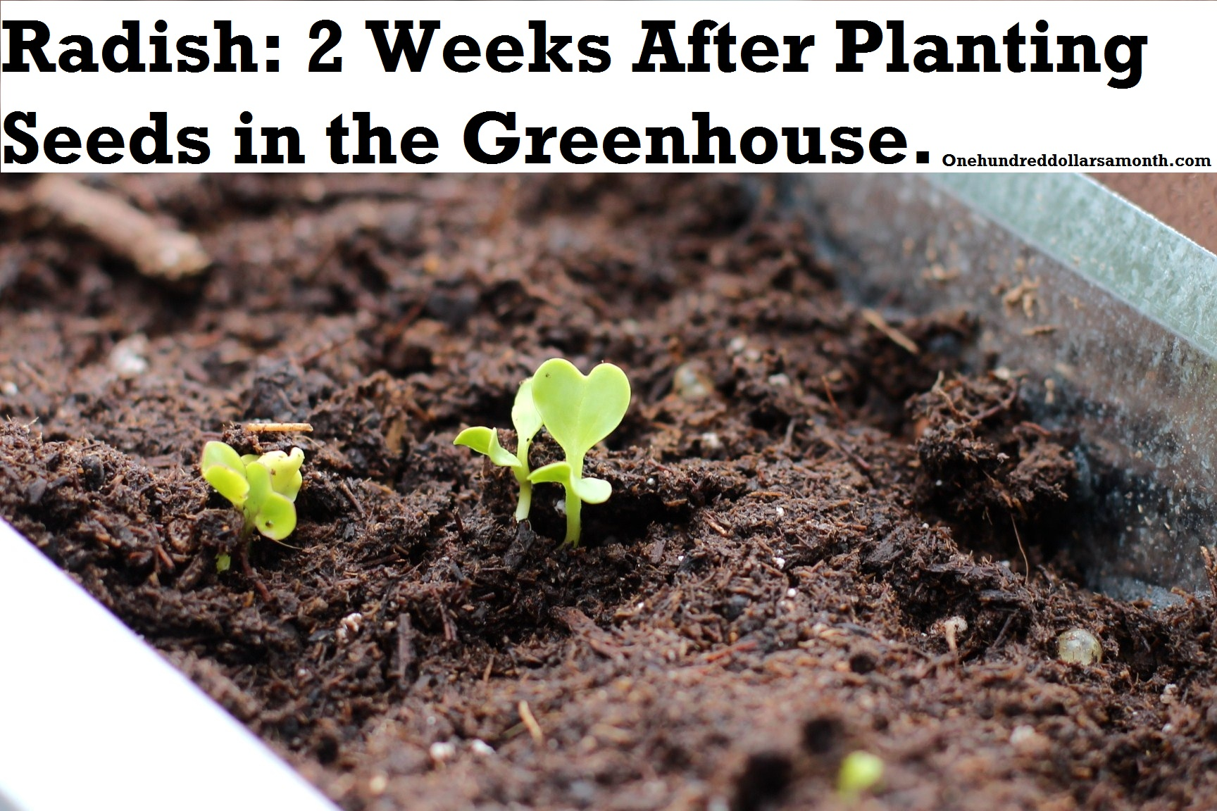 How to Grow Food in a Greenhouse: Update on Newly Planted Seeds