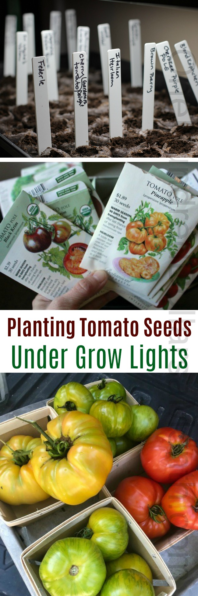 Planting Tomato Seeds With Grow Lights