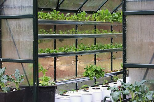 How to Grow Food In a Greenhouse: Show and Tell