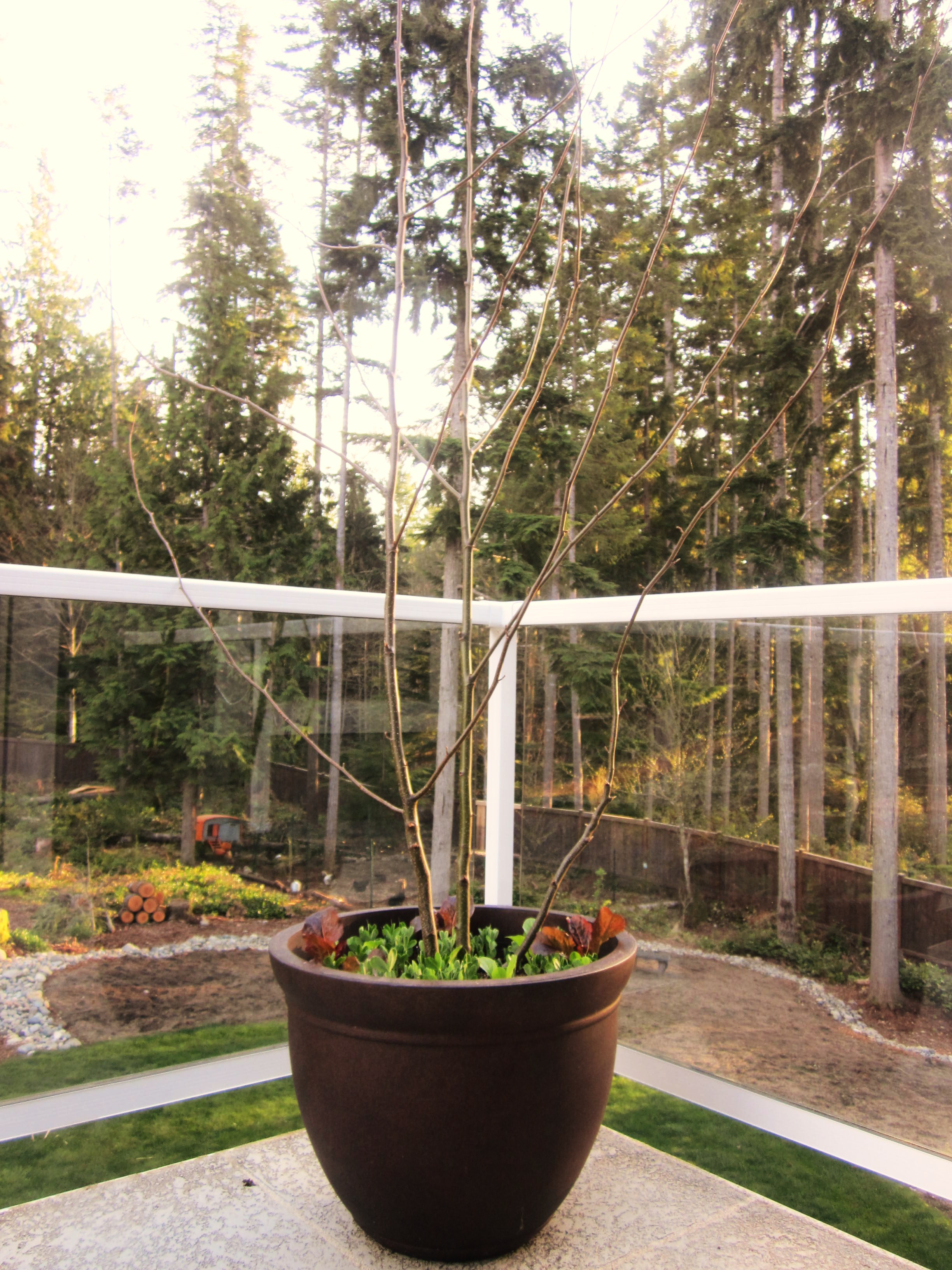 Container Gardening Ideas: Starting a Garden in a Container