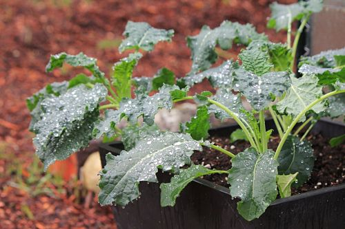 How To Grow Your Own Food: Garden Chores