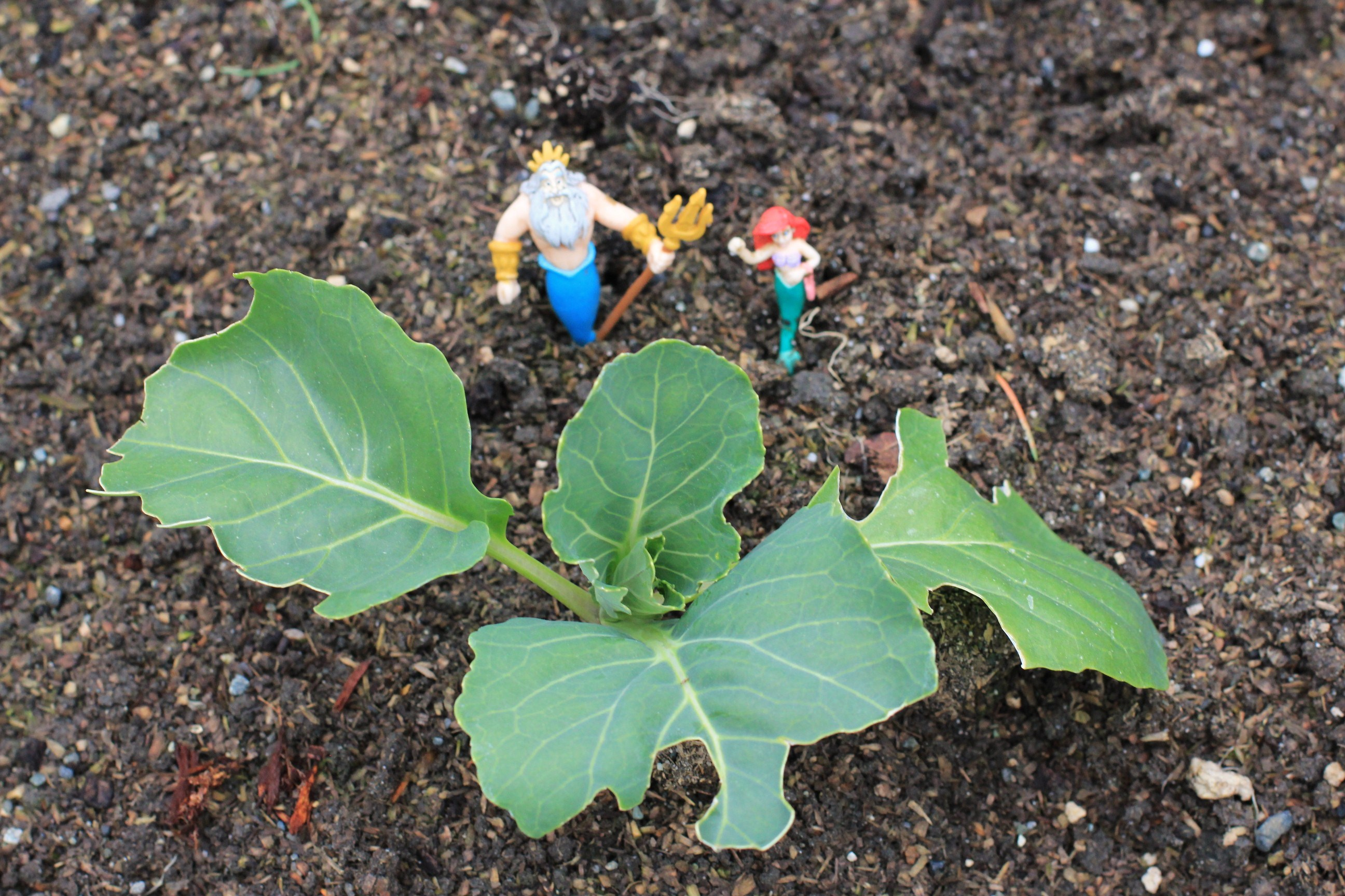 How to Grow Your Own Food: Companion Planting; Thinking Ahead