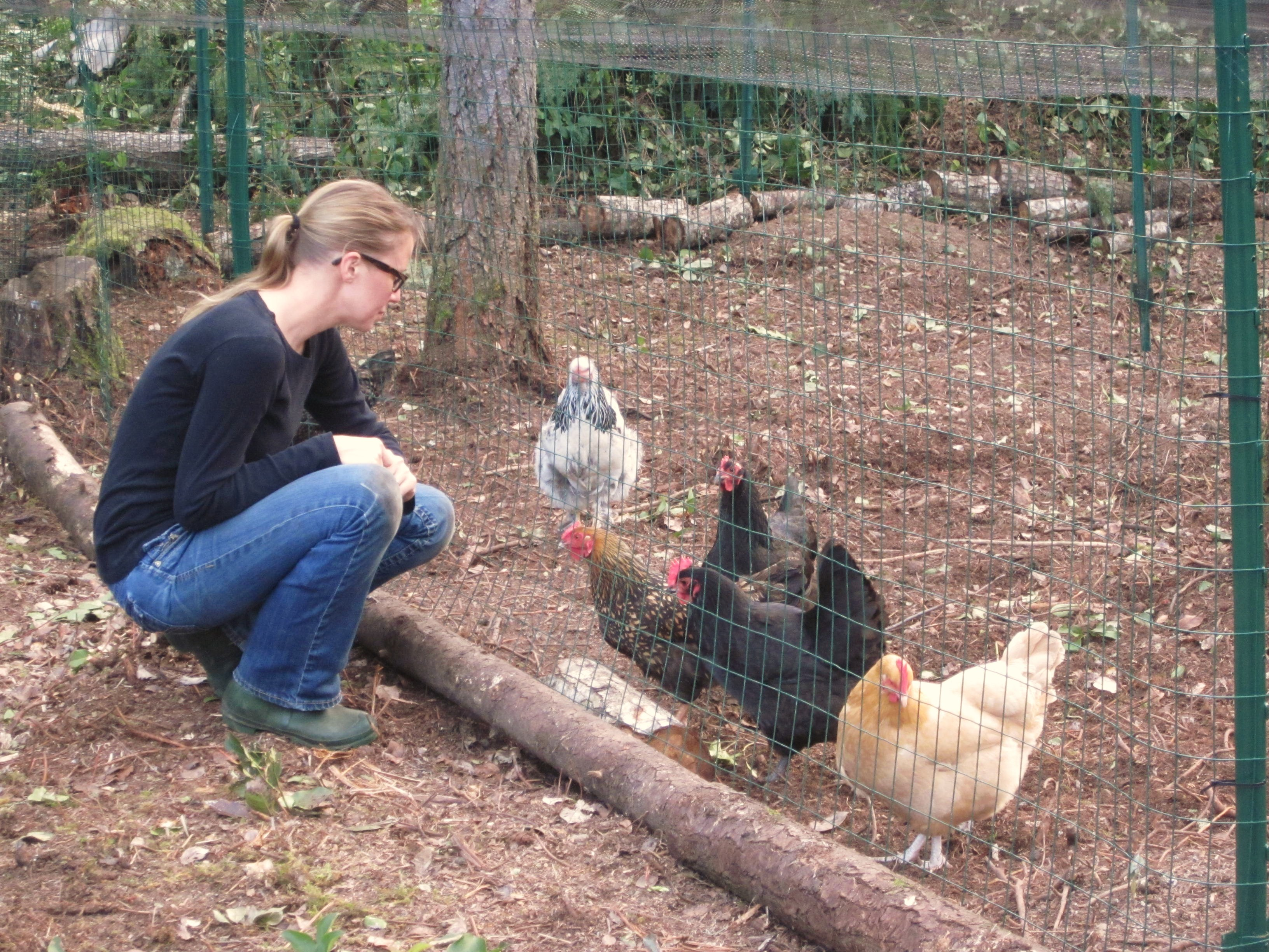 How to Keep Chickens Out of Your Garden: Part 2