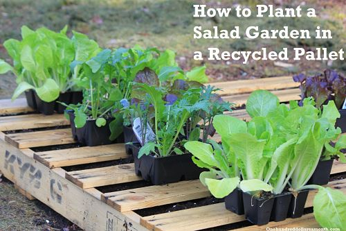 How to Plant a Garden Using Recycled Wood Pallets