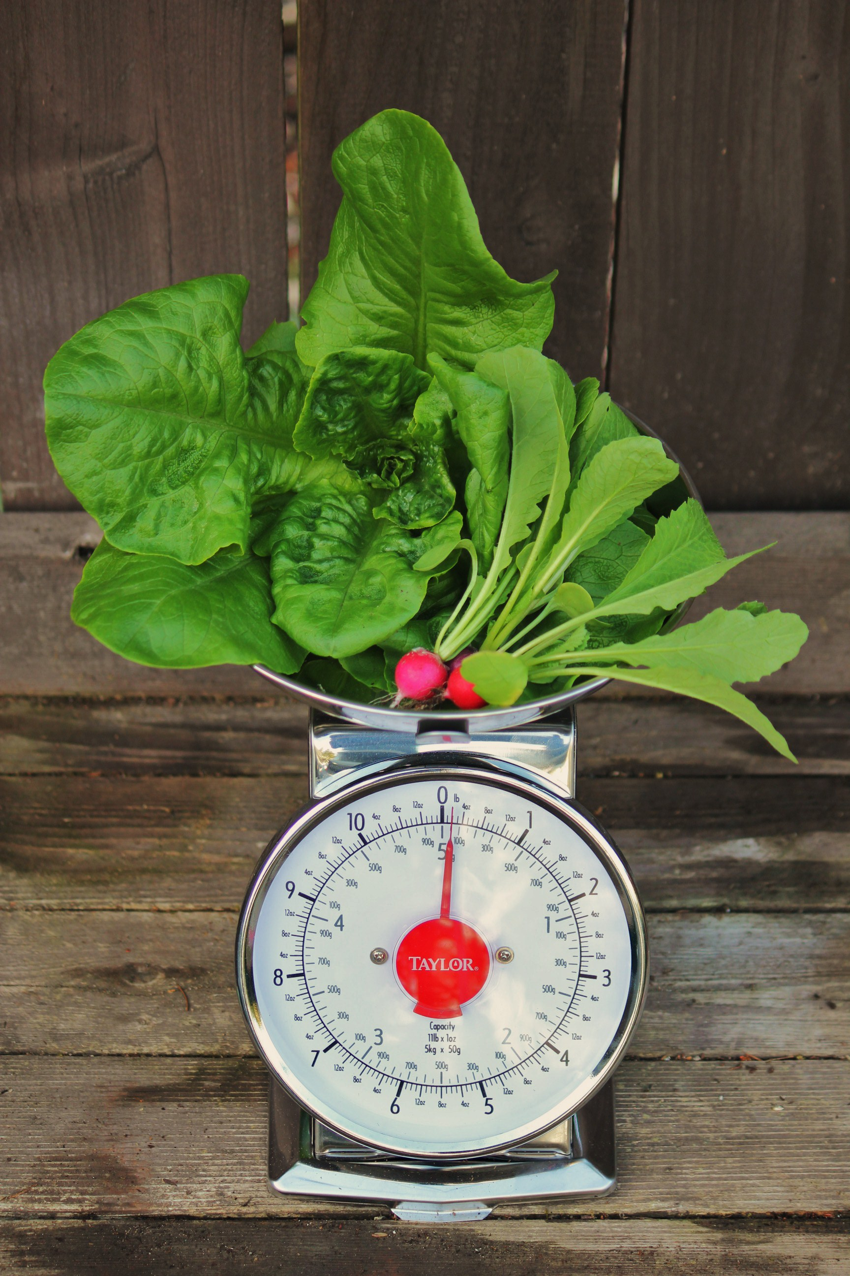 How to Grow Your Own Food: Mavis Invites You on a Garden Tour…
