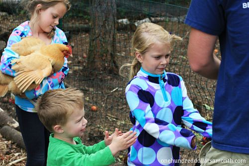 Raising Backyard Chickens: How to Get Rid of Nuisance Chickens
