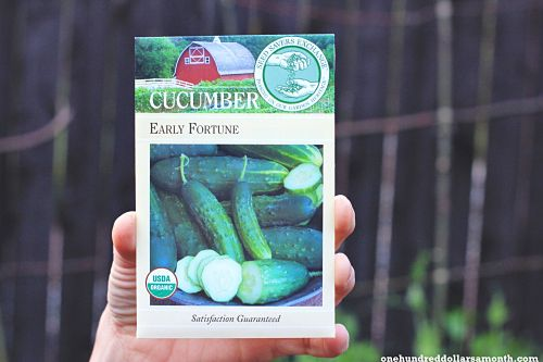 How to Grow Your Own Food: Is It To Early To Plant Tomatoes and Cucumbers?
