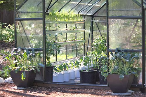 How to Grow Food In a Greenhouse: Grey Mold