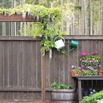 wisteria over garden gate arbor