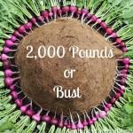 Mavis Garden Blog 2000 pounds
