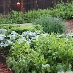 Mavis spring vegetable garden tour