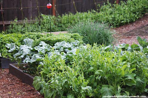 Mavis' Spring Vegetable Garden Tour