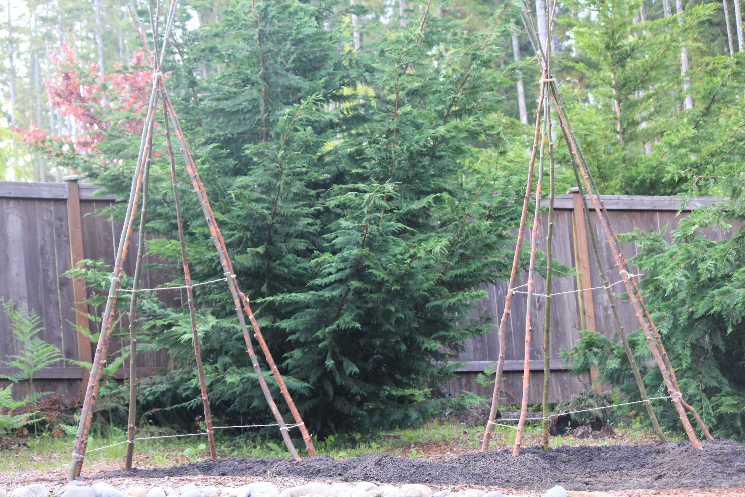 Garden Projects For Kids: How to Build a Bean Teepee