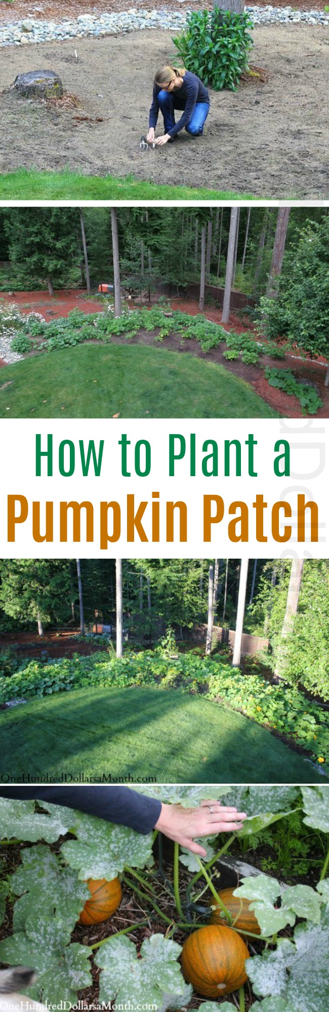 How to Plant a Pumpkin Patch