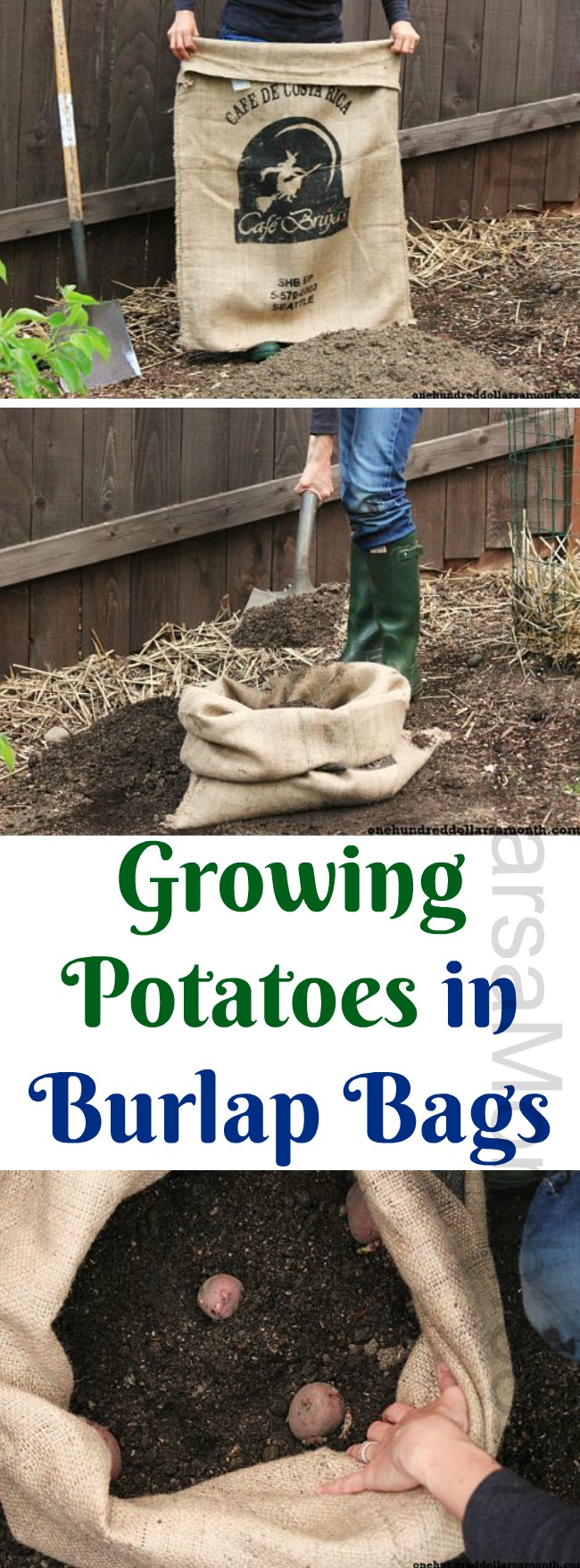 How to Plant Potatoes in a Burlap Bag