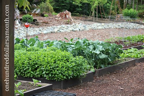 How To Grow Your Own Food: Vegetable Garden Tour