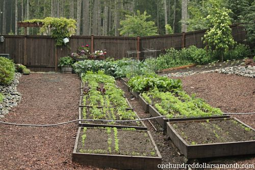 How to Grow Your Own Food – Raised Garden Beds