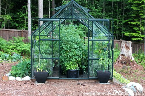 How to Grow Food in a Greenhouse – Tomatoes, Peppers, Strawberries, Basil + More