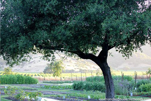 Garden Tour – The French Laundry – Napa Valley, California