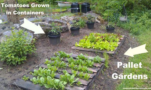 Gardening in Maine : Al and Anita's Garden