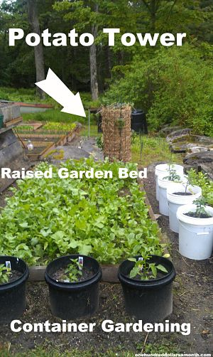 Gardening In Maine Al And Anita 39 S Garden One Hundred Dollars A Month