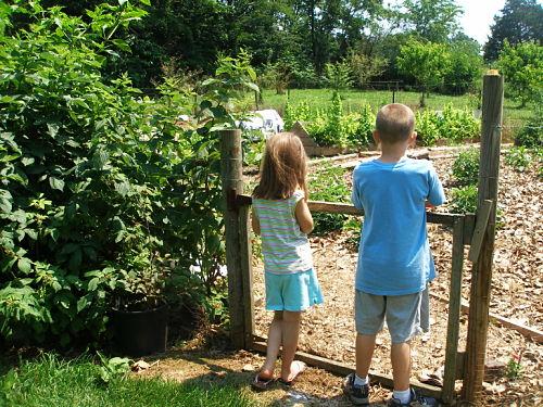Gardening with Kids – Sam and Sadie's Garden