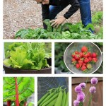 How to Grow Your Own Food: Weigh In Wednesday