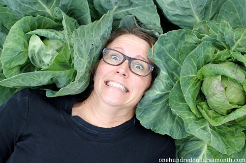 Mavis Garden Blog – How to Grow Big Fat Heads of Cabbage Without Chemicals