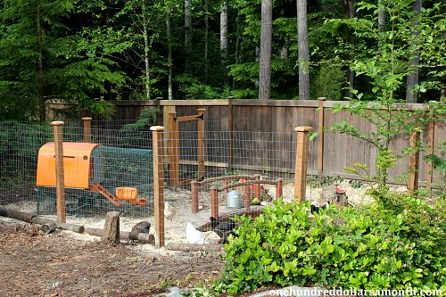 Raising Backyard Chickens – A New Chicken Yard For The Hens