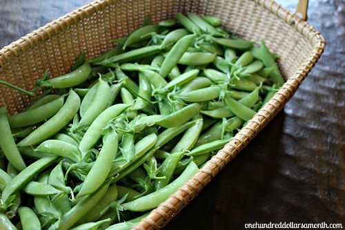 how to gorw sugar snap peas