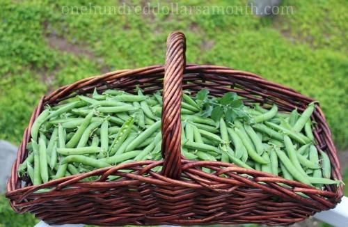 Mavis Garden Blog – Green Arrow Shelling Peas