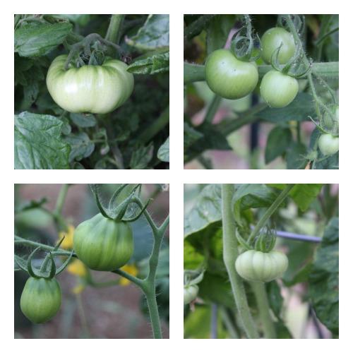 How To Grow Your Own Food – Mavis' Vegetable Garden Tour