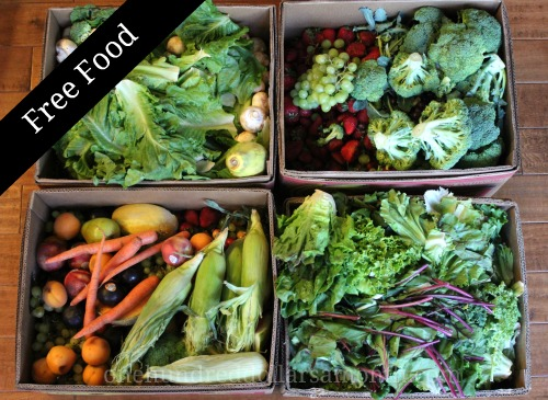 How to Get Free Food Week # 14 – Reclaimed Food Show and Tell