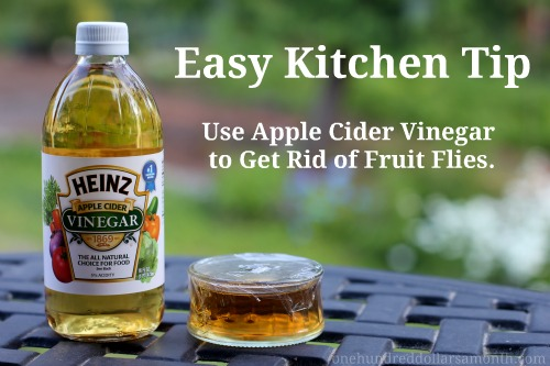 what fruit are you how to get rid of fruit flies in the house