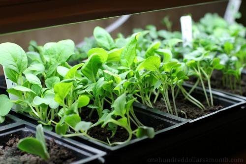 Mavis Garden Blog – Planting a Fall Garden