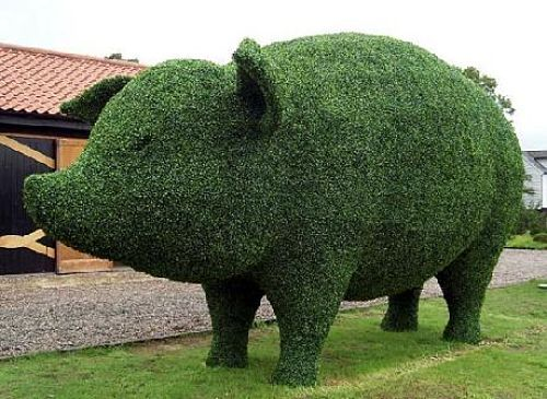 Amazing Topiary Design – Now That's Some Pig