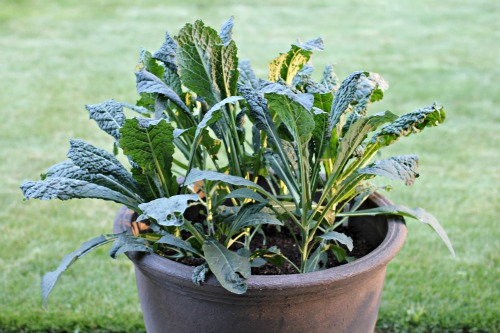 Mavis Garden Blog Now Is The Time To Plant Your Fall