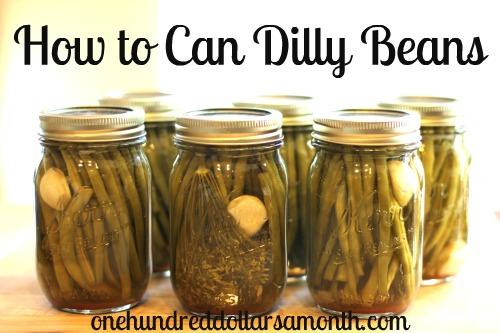 Canning 101 – How to Can Dilly Beans