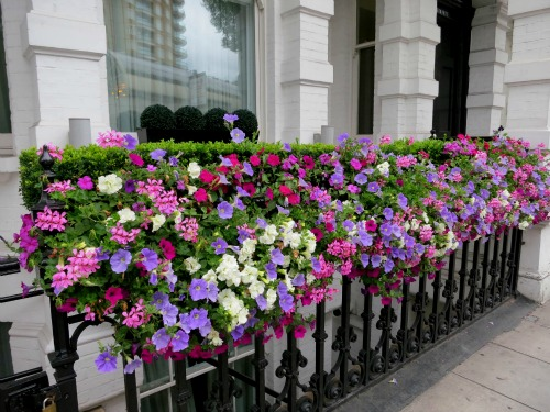 London – Pictures of Various Front Doors and Window Boxes