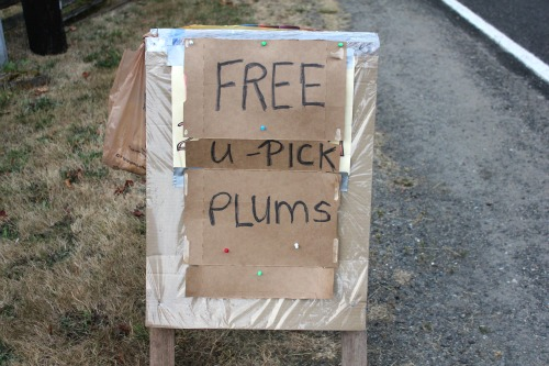 How to Glean Free Fruit and Vegetables – Plum Crazy