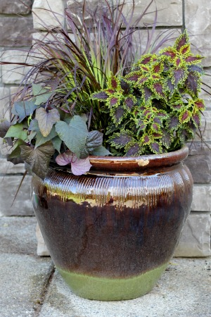 Mavis garden blog ideas for summer container gardening for Planting flowers in pots ideas